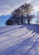 Snows Photo Acrylic Prints - Winter Landscape Acrylic Print by The Irish Image Collection
