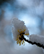 Winter Photos - Winter Light by Mike Reid