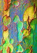 Plane Tree Photos - Winter London Plane Tree Abstract 5 by Margaret Saheed