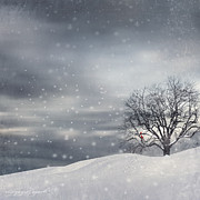 Rotation Photos - Winter by Lourry Legarde
