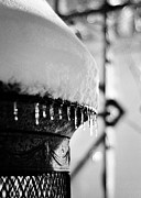 Icicles Photos - Winter Love by Rebecca Sherman