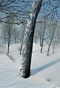 Snow Landscapes Paintings - Winter Maple by Kenneth M  Kirsch