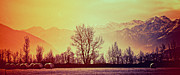 Winter Trees Photos - Winter mood by Silvia Ganora