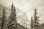 Canadian Winter Art Posters - Winter Mountain Pine Poster by Andrea Hazel Ihlefeld