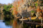 Florida Landscape Photography Prints - Winter on the Hillsborough Print by David Lee Thompson