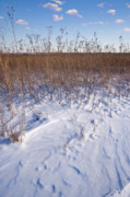 Prairie Grass Originals - Winter On The Prairie by Steve Gadomski