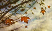Fall Leaves Framed Prints - Winter On The Way Framed Print by Rebecca Cozart