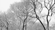 Snow And Trees Framed Prints - Winter Panorama  Framed Print by Robert Ullmann