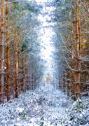 Winter Woods Framed Prints - Winter Path Framed Print by Svetlana Sewell