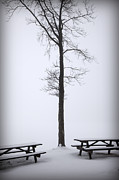 Picnic Table Framed Prints - Winter Picnic Tables Tree Framed Print by John Stephens