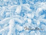 Winter Photos Prints - Winter Pine Print by Methune Hively