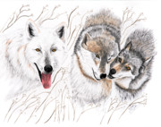 Wolves Drawings - Winter Play by Joette Snyder