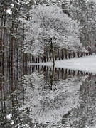 Outdoor Prints - Winter Reflection Print by Aimee L Maher
