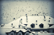 Winter Crows Posters - Winter roofs Poster by Silvia Ganora