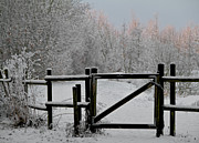 Fence Gate Posters - Winter Scene Poster by Odd Jeppesen