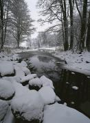 Woodland Scenes Prints - Winter Scene Of Creek With Snow-covered Print by Mattias Klum