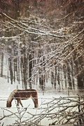 Grazing Horse Posters - Winter scene with horse grazing in wooded pasture Poster by Sandra Cunningham
