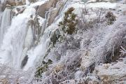 Power Plants Posters - Winter Scene With Ice-covered Plants Poster by Darlyne A. Murawski