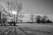 Nature Scene Originals - Winter Shadow by Terence Davis