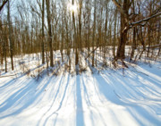 Snowed Trees Photos - Winter Shadows by Tim  Fitzwater