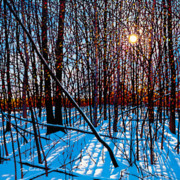 Tim Packer - Winter Shine