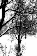Winter Trees Art - Winter by Simone Hester
