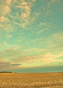 Cornfield Photos - Winter Sky by Christina Klausen