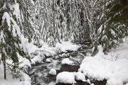 Mt Hood National Forest Prints - Winter Snow Along Still Creek In Mt Print by Craig Tuttle