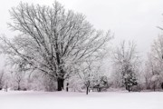 Scott Hovind - Winter Snow Storm 1