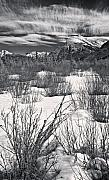 Dogwood Lake Framed Prints - Winter Spice in Monochrome Framed Print by Royce Howland