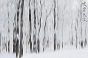 Andrea Kollo - Winter Storm
