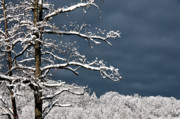 Winter Storm Metal Prints - Winter Storm Coming Metal Print by Thomas R Fletcher