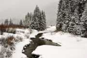 Winter Stream Print by Frank Remar