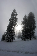 Winter Trees Photo Originals - Winter Sun by Alex Lemus