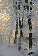 Winter Scene Metal Prints - Winter Sun Metal Print by Odd Jeppesen