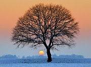 Bare Tree Posters - Winter Sunset With Silhouette Of Tree Poster by Pierre Hanquin Photographie