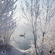 Winter Landscape Prints - Winter Swan Print by E.M. van Nuil