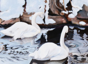 Swans... Paintings - Winter Swans by Lester Nielsen