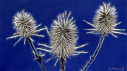 Jaunty Posters - Winter thistle Poster by Desislava Kulelieva