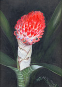 Epiphyte Painting Prints - Winter Torch Print by Penrith Goff