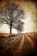 Sepia Photo Posters - Winter Track With Trees Poster by Meirion Matthias