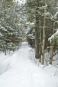 Mgp Photography Framed Prints - Winter trail 2200 Framed Print by Michael Peychich