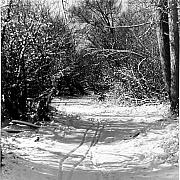 Allan McConnell - Winter Trail