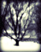 Winters Art - Winter Tree 3 by Perry Webster