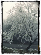 Nature Photography - Winter Tree by Cathie Tyler
