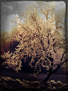 Nature Photography - Winter Tree Dark by Cathie Tyler