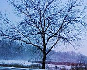 Anna Villarreal Garbis Acrylic Prints - Winter Tree II Acrylic Print by Anna Villarreal Garbis