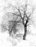 Snowstorm Digital Art Posters - Winter Tree in Field of Snow Sketch Poster by Randy Steele