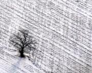 Bill Lang - Winter Tree in New Snow