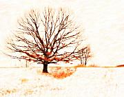 Field Mixed Media Acrylic Prints - Winter Tree Acrylic Print by Randy Steele